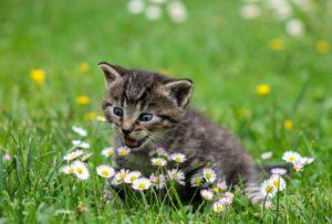 Gato animal de poder